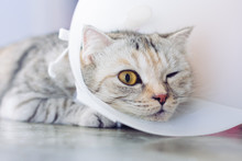 Cat Wearing A Protective Buste...