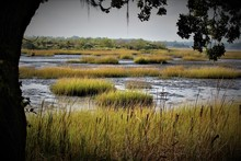 Peaceful Southern Charleston S...