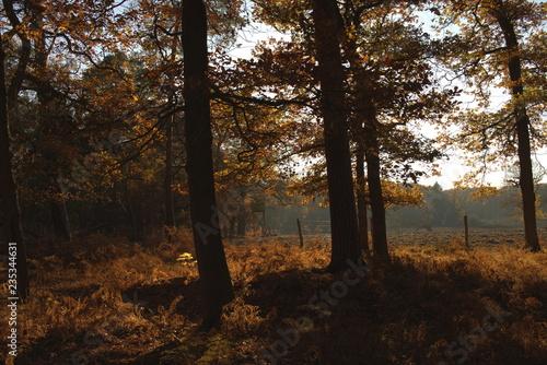 Foto op Plexiglas Cappuccino Goldener Herbstwald mit Farnen in der Abendsonne