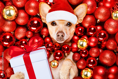 Keuken foto achterwand Crazy dog christmas santa claus dog and xmas balls