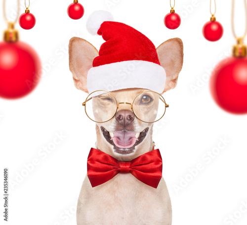 Spoed Foto op Canvas Crazy dog christmas santa dogs