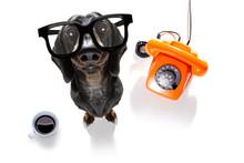 Office Worker Businessman Sausage Dachshund Dog