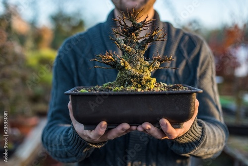 Young man bonsai artist holding pot with bonsai tree