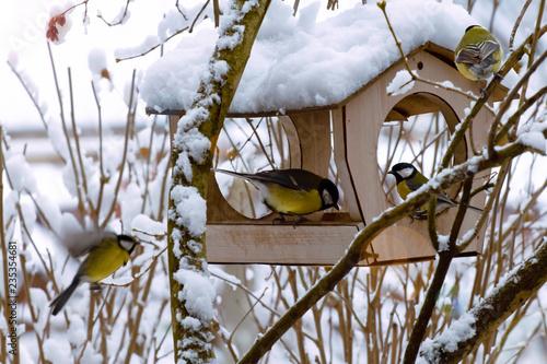 Naklejka premium stado niebieskich sikorek w zimowy poranek w pobliżu podajników