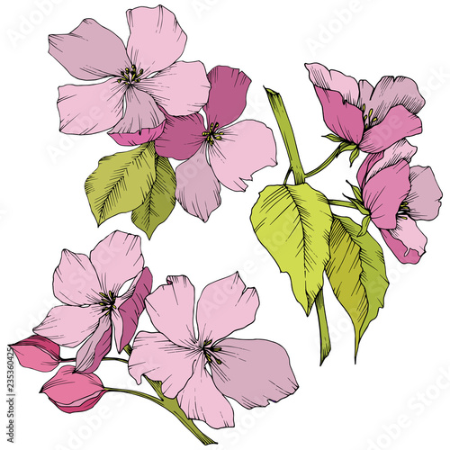 Tuinposter Vlinders Vector. Appe blossom flowers. Pink and green engraved ink art. I