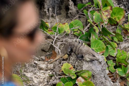 Photo Stands Asia Country Iguana, Tulum, Quintana Roo, Mexico