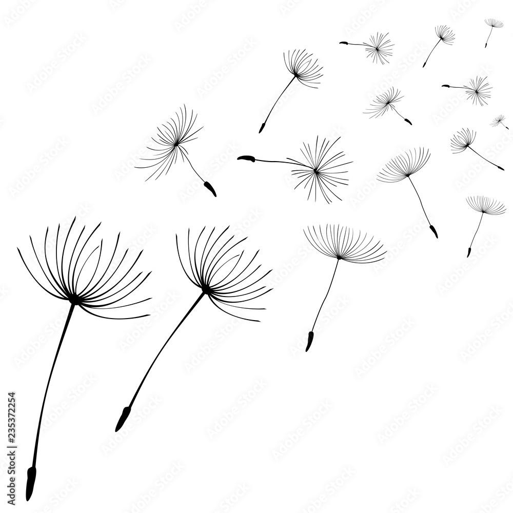Fototapety, obrazy: Abstract black dandelion, flying seeds of dandelion - stock vector