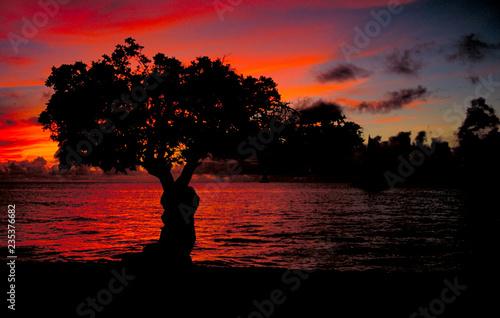 Photo  Divi Divi Tree Sunset on the coastline of Aruba