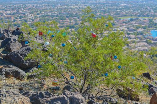 Fotografie, Obraz  Thunderbird Park Christmas Bushes, Maricopa County, Glendale, Arizona