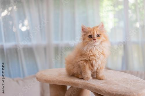 Fototapeta Cute kitten in morning obraz na płótnie