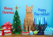 Orange Tabby Cat Sitting Between A Christmas Tree And A Hanukkah Menorah, Looking At Viewer. Many Multi Faith Families Celebrate Both Xmas And Hanukkah. Punny Text Meowy Christmas Happy Paw-nukkah