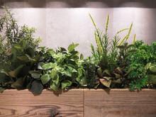 植物 高品質フェイク