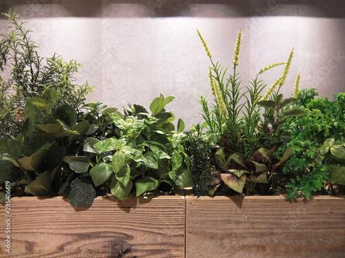 Fényképezés  植物 高品質フェイク