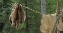 Old Western Town Theme. Animal Pelts Hanging On A Line