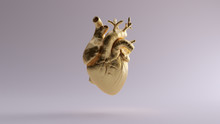 Gold Anatomical Heart 3d Illus...