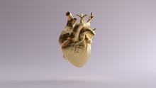 Gold Anatomical Heart 3d Illustration 3d Render