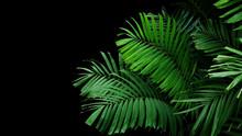 Tropical Palm Leaves, Rainforest Foliage Nature Plant Bush On Black Background.