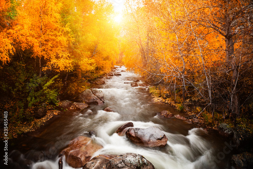 Garden Poster Chocolate brown River in autumn forest at sunset. Altai, Siberia, Russia. Long exposure shoot