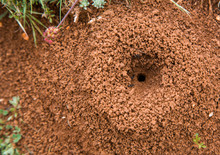 Ant Entrance