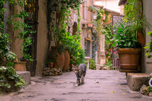Mougins, France, June 6th , 2016. Cat Strolling On A Narrow Street In The Old Town Mougins In France. .