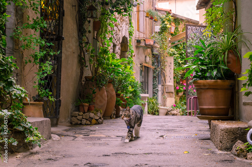 Canvas Prints Narrow alley Mougins, France, June 6th , 2016. Cat strolling on a narrow street in the old town Mougins in France. .