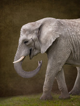 Elephant For Digital Composites Suitable For Baby Photoshop