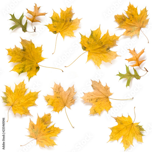 Autumn maple and oak leaves isolated on white background. Fall concept.