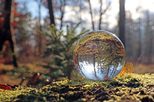 Herbstwald In Kristallkugel, Schweiz