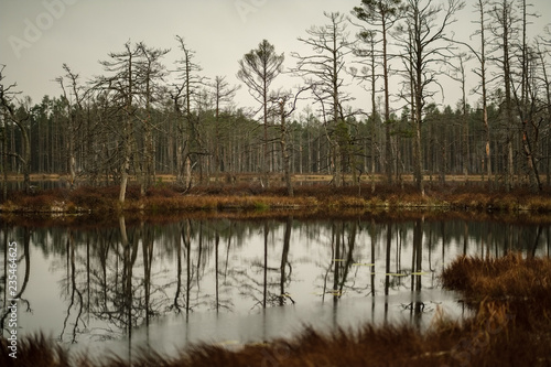 Staande foto Chocoladebruin swamp landscape view with dry pine trees, reflections in water and first snow