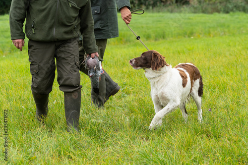 Poster Dog Dutch partridge dog, Drentse patrijs hond, walking on a leash with two hunters holding a pigeon in a field