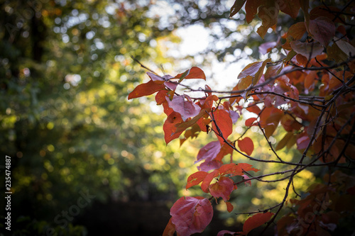 Foto op Canvas Herfst Fall scene. Beautiful Autumnal park. Leaves Forest path in autumn.