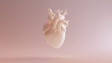 Flesh Colored Anatomical Heart...