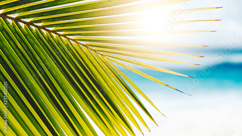 Poster Palmier Palm leaves on blue sky background. weekend Holidays tropical beach concept background