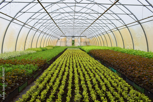 young plants in a greenhouse Wallpaper Mural