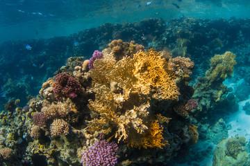 Naklejka na ściany i meble coral reef with fish