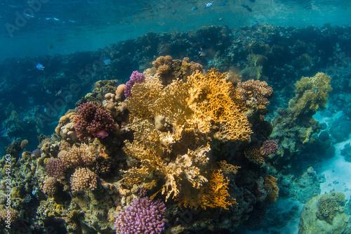 Staande foto Koraalriffen coral reef with fish