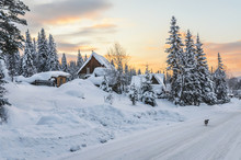Siberian Village In Winter At Sunset, At Houses Near The Forest, No People, The Dog Is Running Along The Road, Mountain Shoria, Siberia, Russia