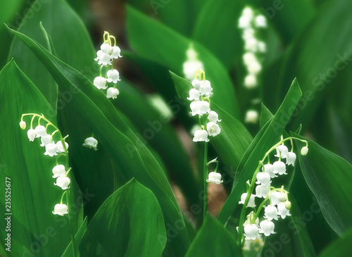 Lilies of the valley, beautiful springtime floral background