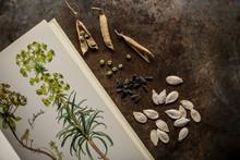 Herbier Avec Graines De Légumes Et Plantes