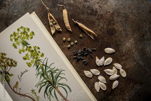 Fototapeta Herbier avec graines de légumes et plantes