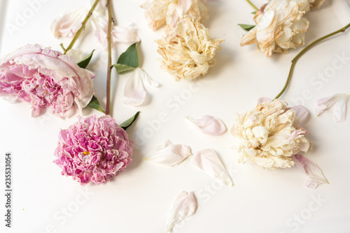 Fotografía Nature background - full frame view of wilting peony flowers on white background