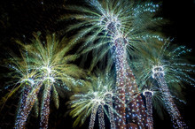 Holiday Palm Trees Decorated W...