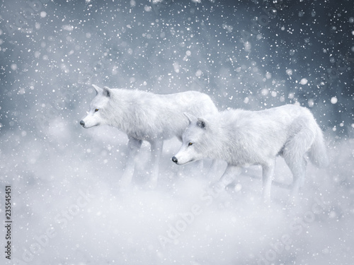 Naklejki wilk  3d-rendering-of-two-majestic-white-wolfs-in-snow