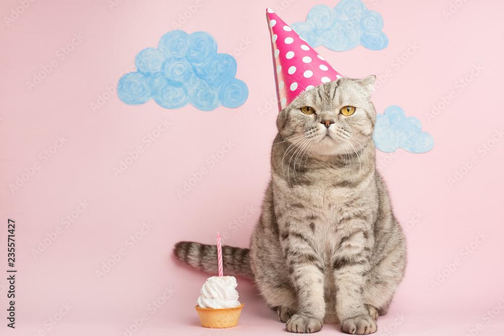 Fototapeta Merry kitty, birthday. Banner, anniversary or holiday