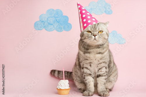 La pose en embrasure Chat Merry kitty, birthday. Banner, anniversary or holiday