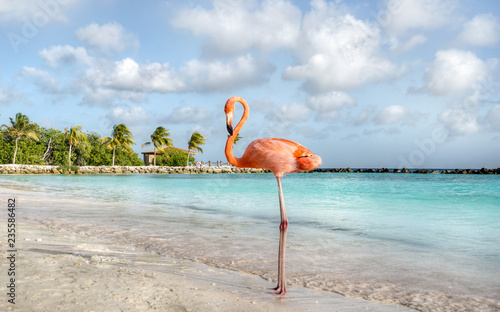 In de dag Flamingo Aruba Island