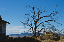 The Dead Tree On The Side Of The Empty Old Home In The Great Basin Desert.