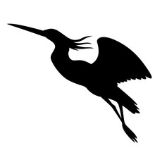 Heron In Flight , Vector Illustration ,  Black Silhouette