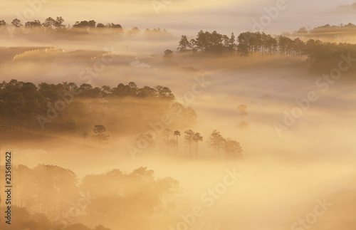 Foto auf Acrylglas Wald im Nebel Amazing view of mountain, mist & cloud when dawn coming.