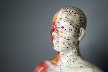 Acupuncture Points Model